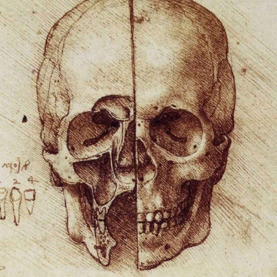 Leonardo da Vinci, Anatomical study of a human skull.