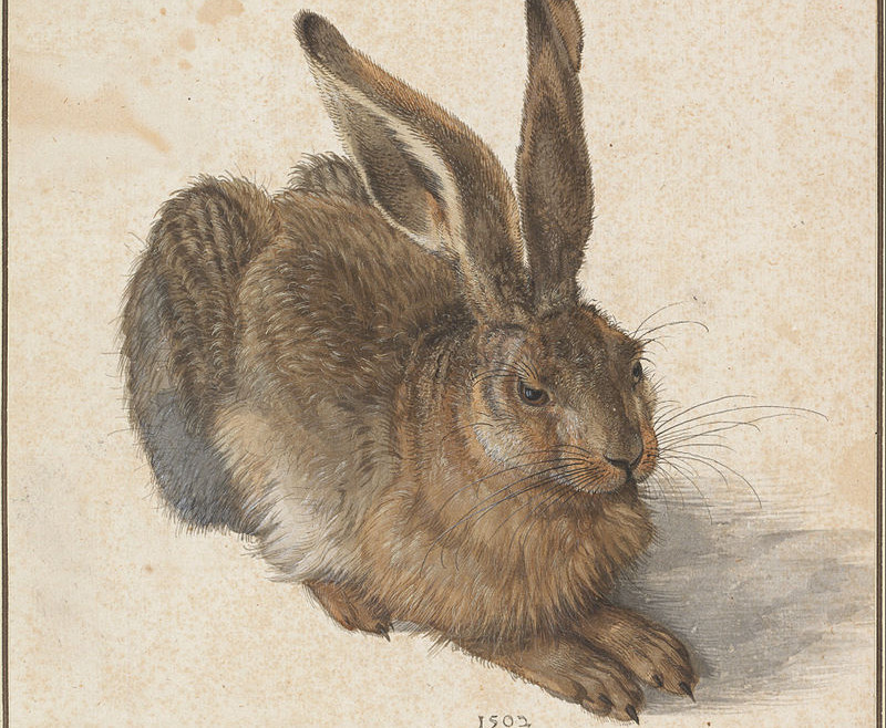 """Albrecht Dürer, """"Young Hare."""" (1502)"""
