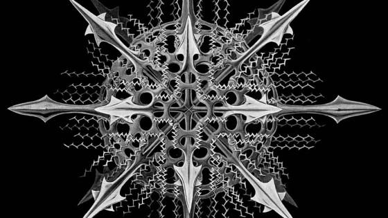 Ernst Haeckel, Specimen of radiolaria (a type of marine Protozoa)